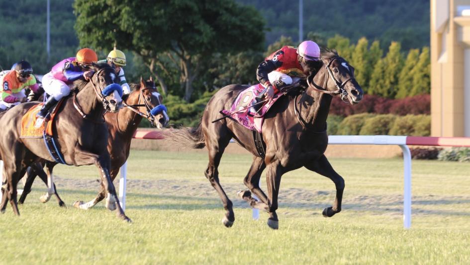 Equibase | Horse Racing | Horse Racing Entries | Horse ...